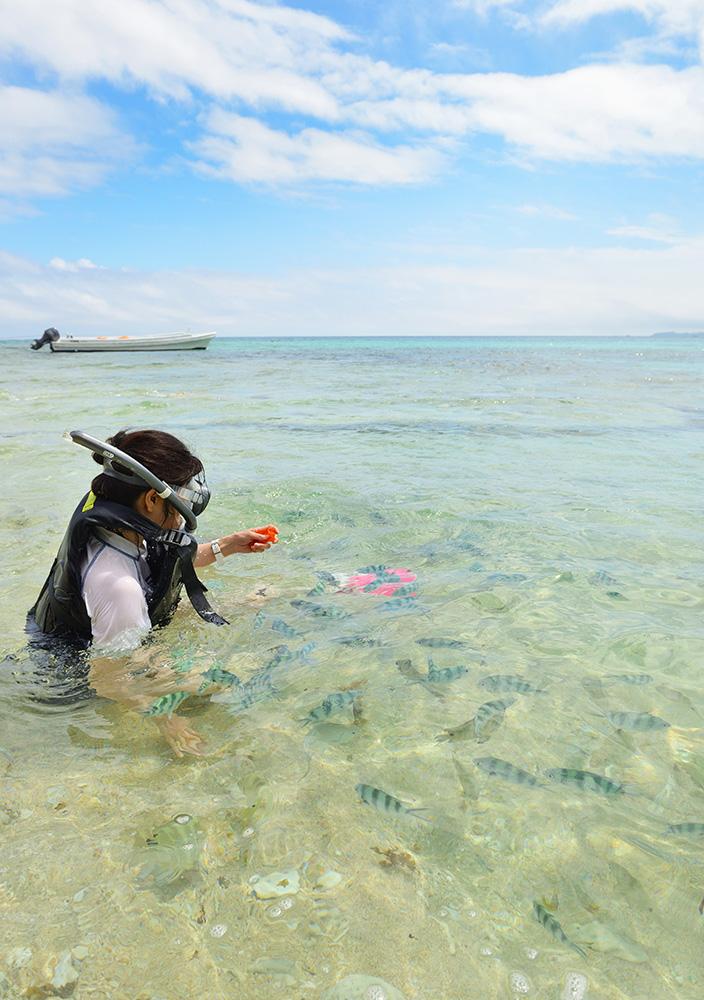 コマカ島 魚餌付け